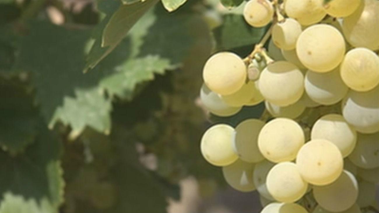 Una familia de Arganda del Rey ofrece rutas etnológicas en sus viñas