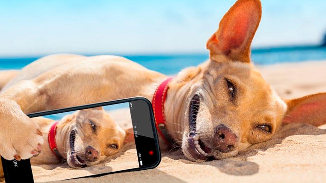 Más de 80 playas españolas aceptan mascotas además de otros lugares públicos