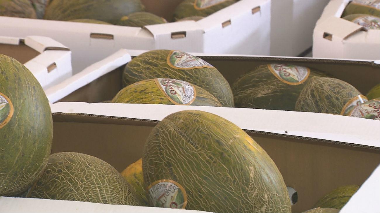 Los melones más famosos de España, en Villaconejos
