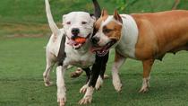 La responsabilidad de los dueños de perros peligrosos, bajo lupa