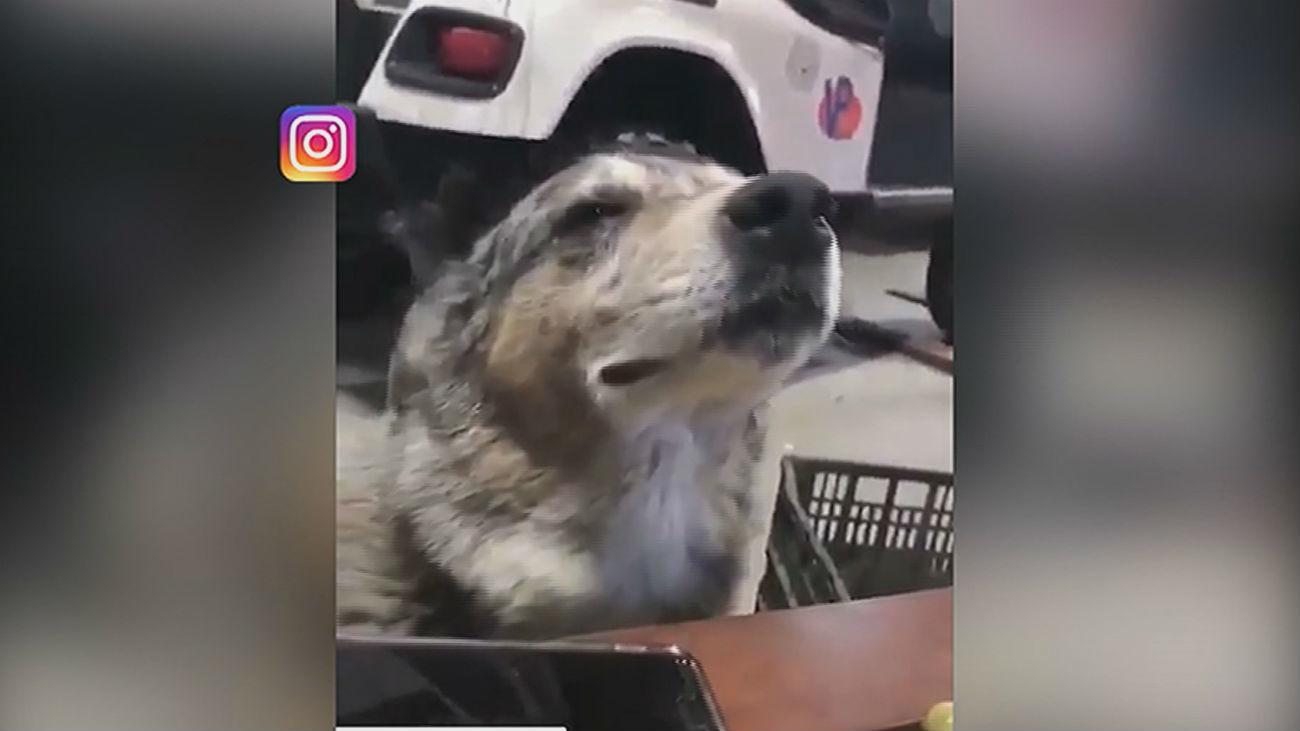 Los perritos más influencers