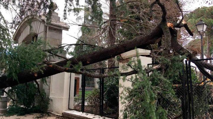 El ayuntamiento estrena un servicio para inspeccionar 545.000 árboles
