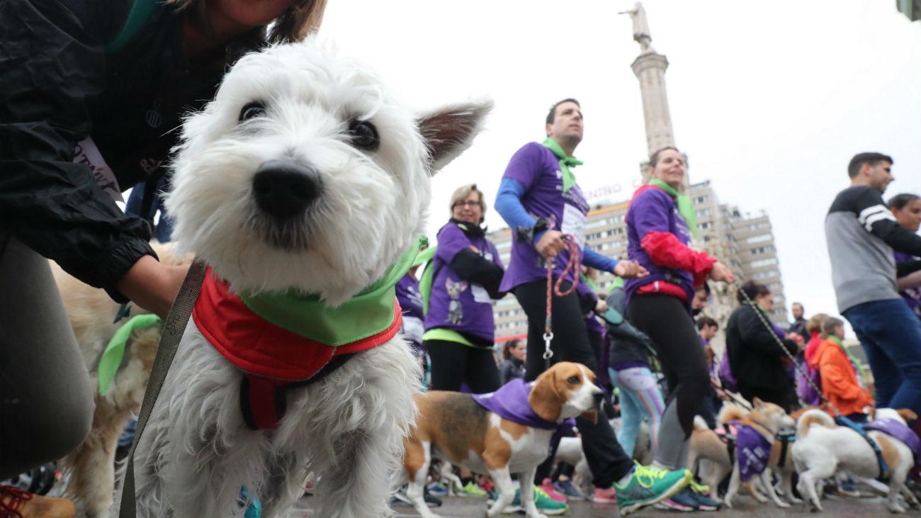 Más de 4.000 participantes corren junto a sus mascotas en la VII edición de Perrotón