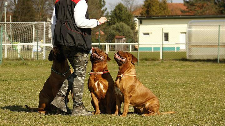 Adiestrador canino, una profesión de futuro