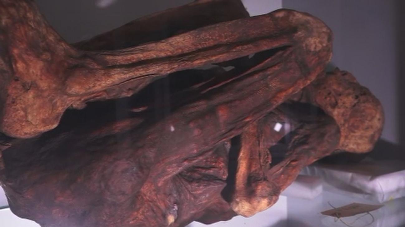 La mayor colección de momias de España está en la UCM