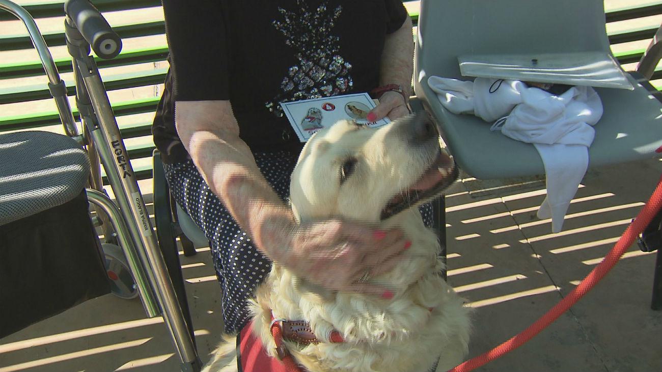 Perros que ayudan ante el alzheimer