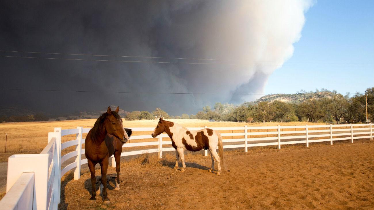 Lady Gaga, Kardashian, Del Toro y otros famosos, evacuados por el fuego de Malibú