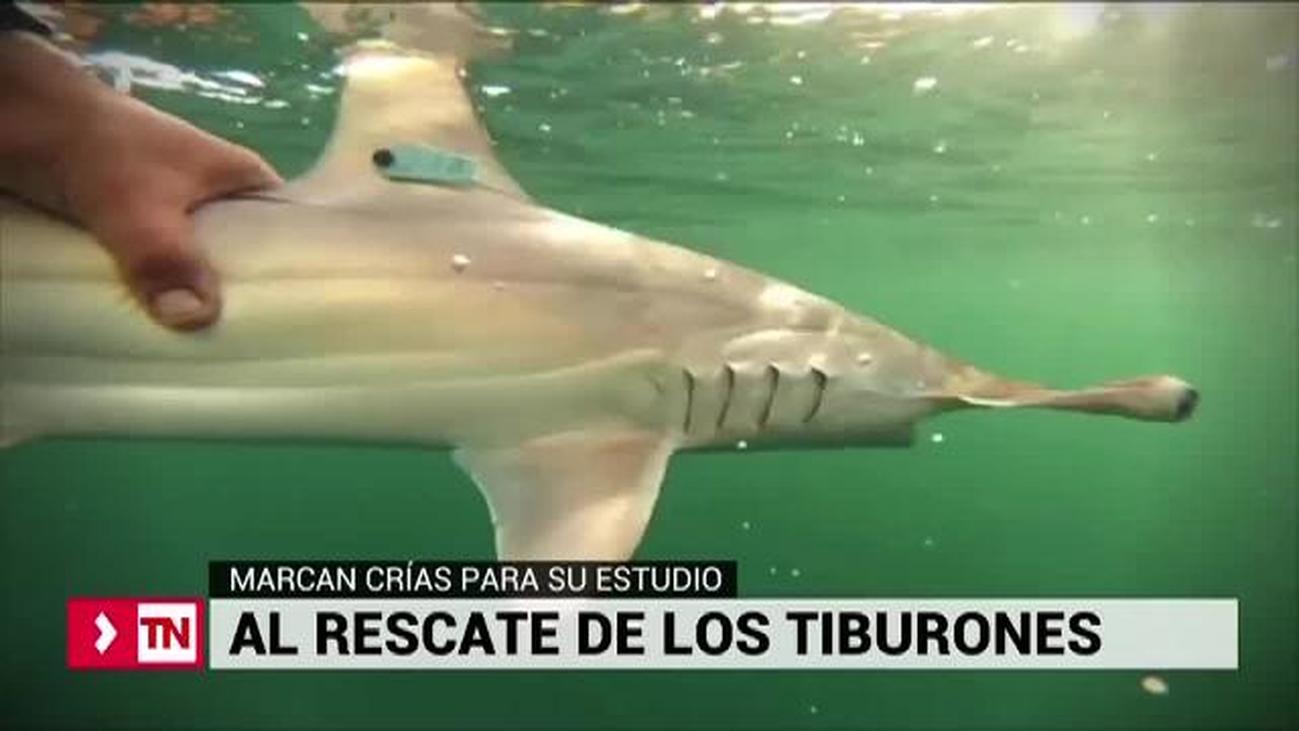 Misión Tiburón al rescate de los escualos