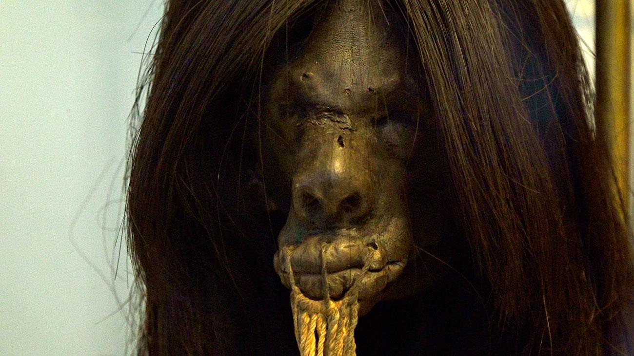 Tarde de misterio en el Museo de Antropología