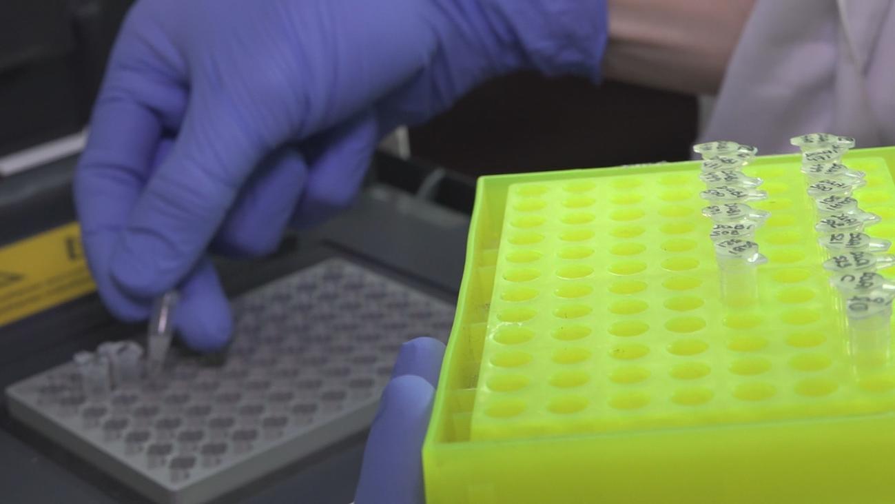 Crean los dos primeros bebés modificados genéticamente