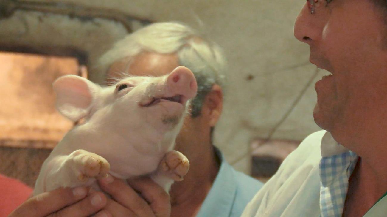 """""""La Moralejita"""", la mayor granja porcina del sur de Madrid"""