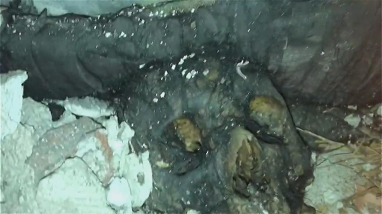 Huesos humanos al aire libre en el cementerio de la Almudena