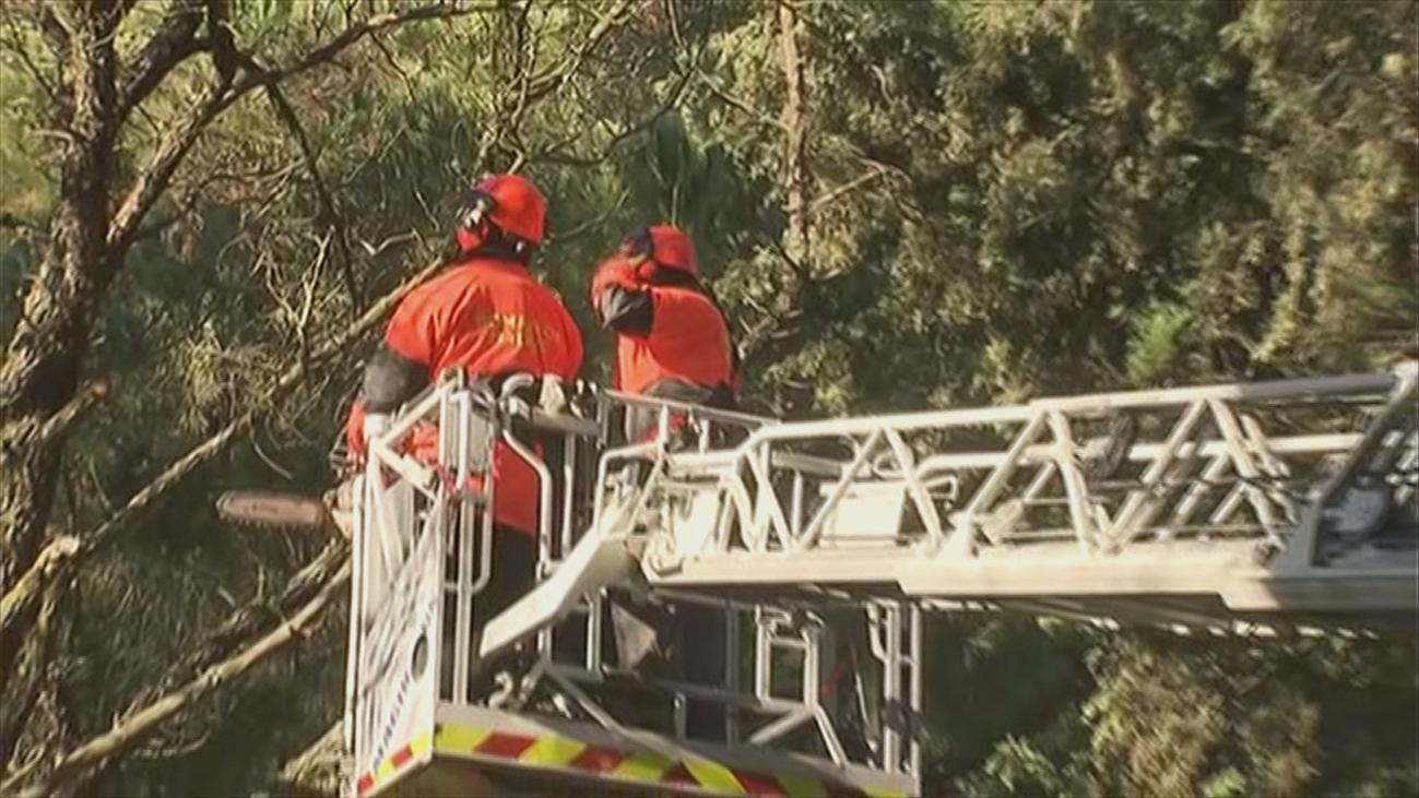Los bomberos de Madrid entrenan técnicas sobre árboles dañados