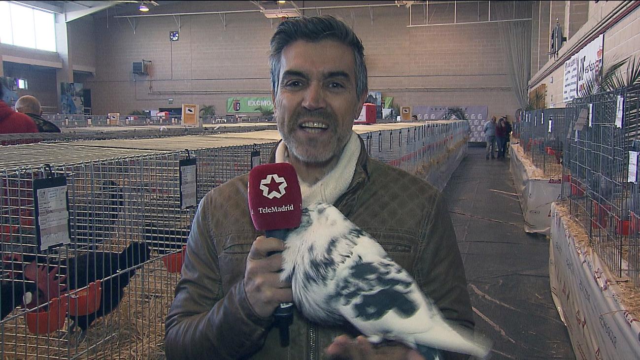 Inicia la mayor Feria Avícola de Madrid que cuenta con más de 1.300 aves