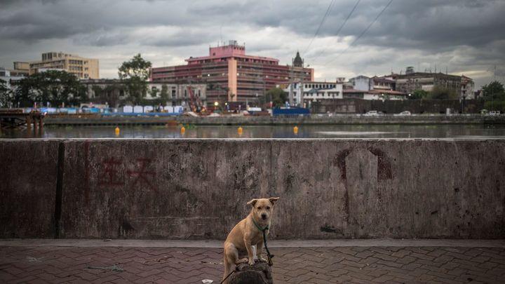 El Congreso negociará la reforma del Código Civil para que los animales dejen de ser 'cosas'