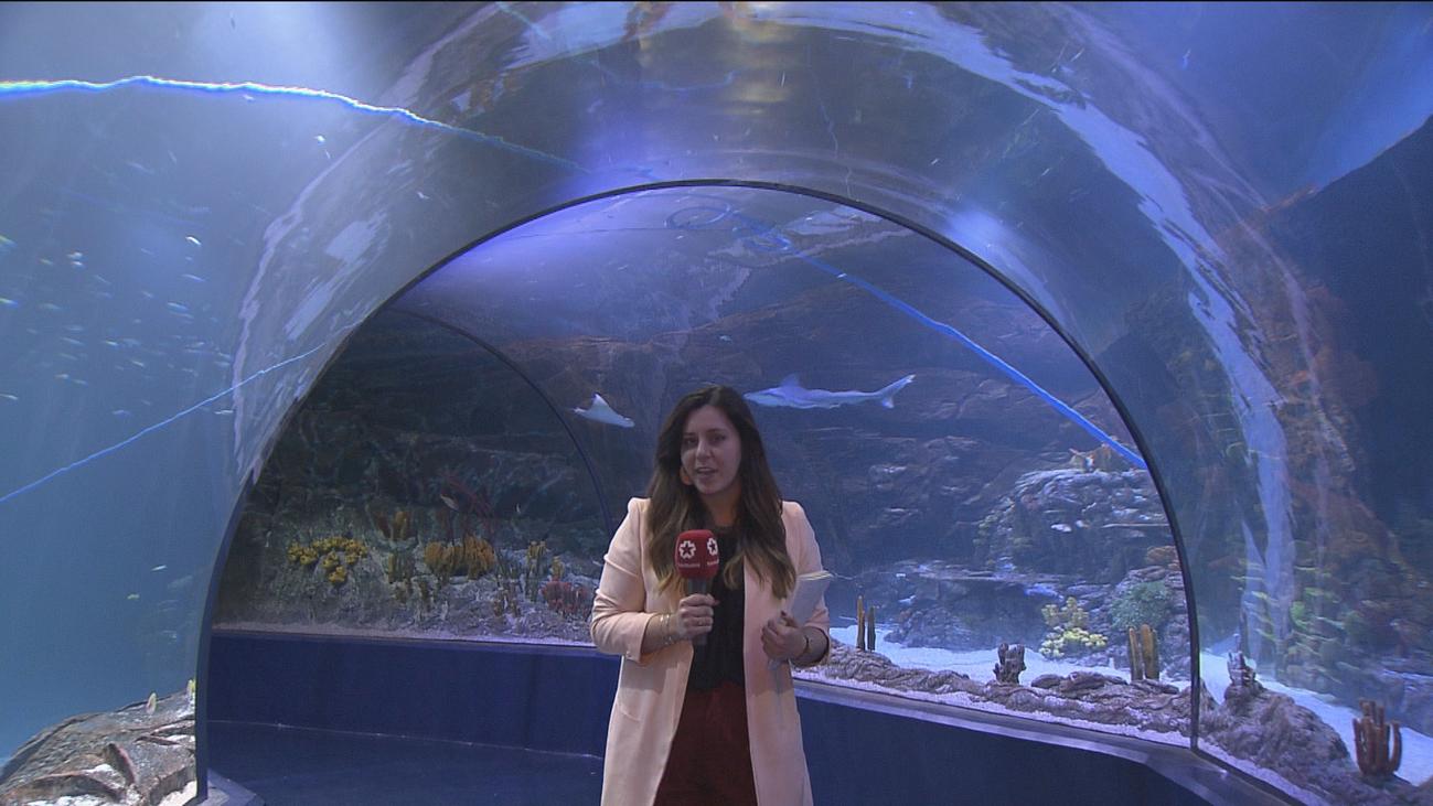 Atlantis: primer acuario interactivo de Europa y con 10.000 animales marinos