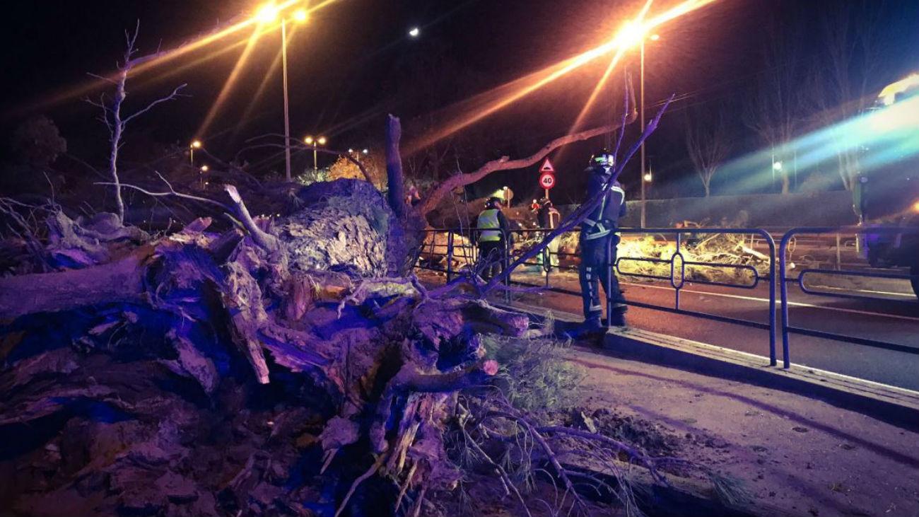 Dos heridos al caer un árbol sobre un turismo en Boadilla