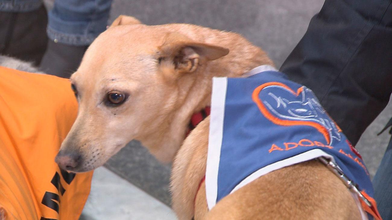 Aumenta un 30% la adopción de mascotas en la Comunidad de Madrid