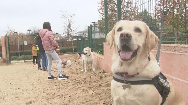 Hasta 3.000 euros de multa en Leganés por no recoger los excrementos de los perros