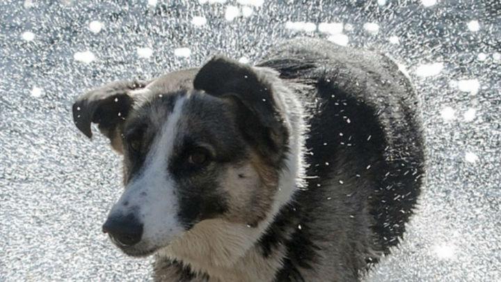 Una ciudad china anuncia una 'política de perro único'