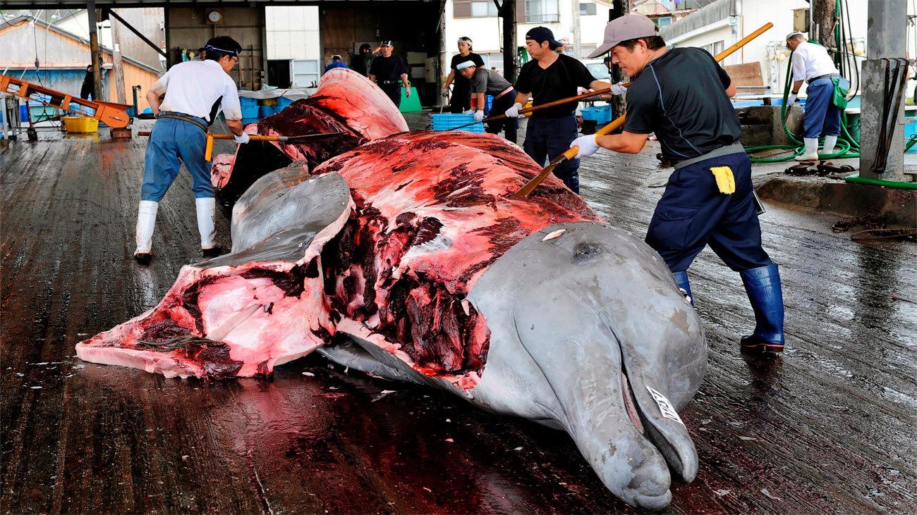 Japón se retira de la comisión que protege a las ballenas