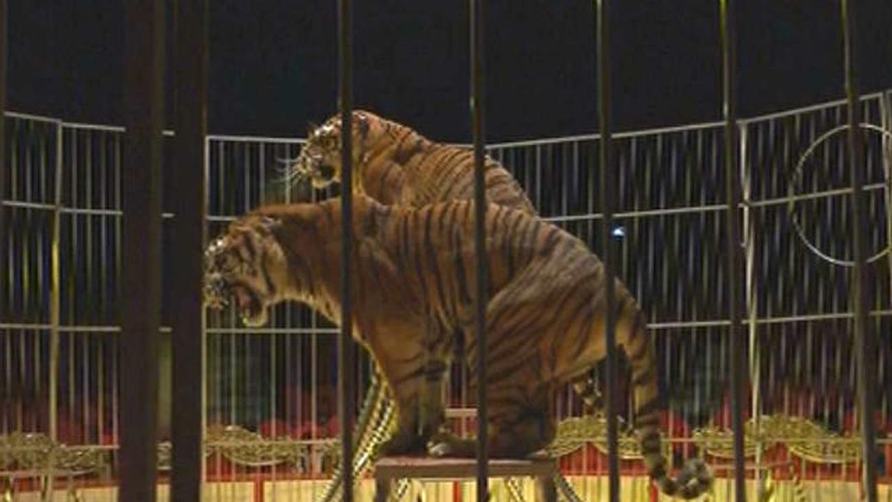Madrid mantiene que los ayuntamientos son los responsables de los circos con animales