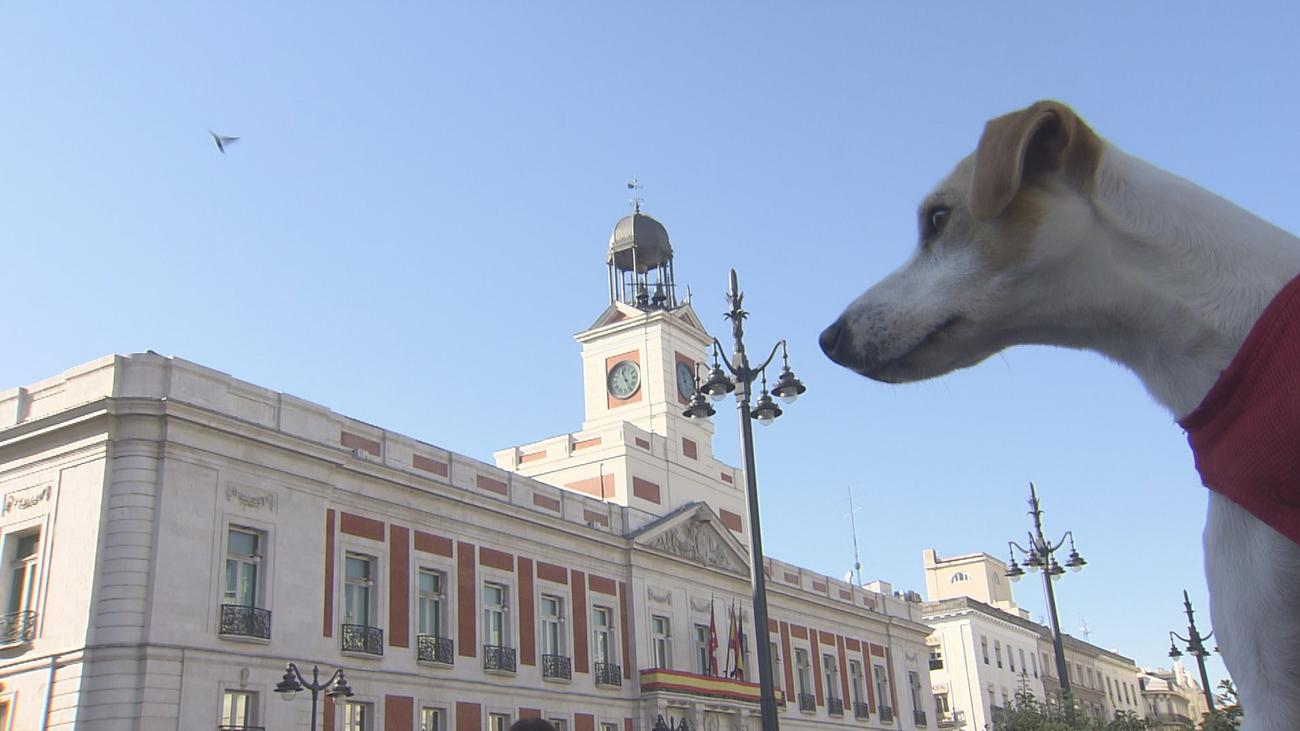 ¿Es Madrid una ciudad 'amigable' para los perros?
