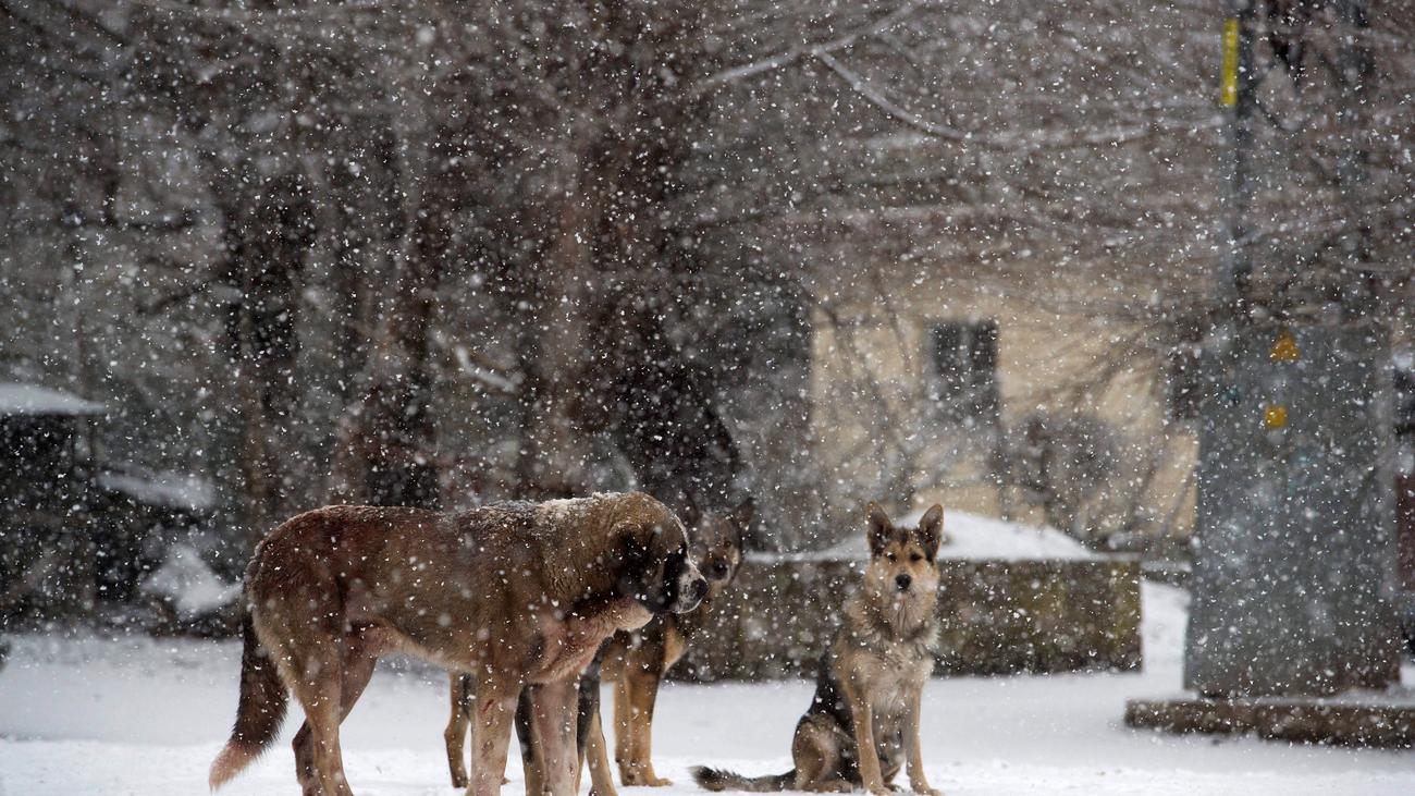 Casi 40 provincias con riesgo por frío y nieve