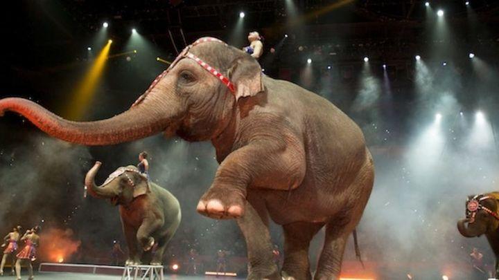 Carmena prohíbe los circos con animales salvajes