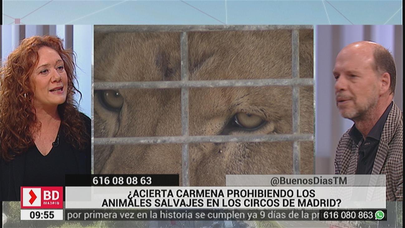 ¿Acierta Carmena prohibiendo los animales salvajes en los circos de Madrid?