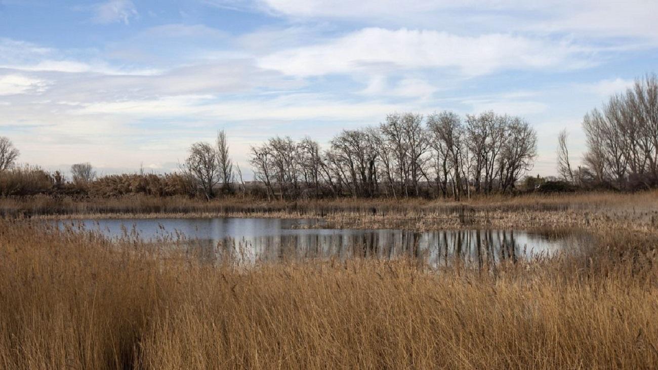 Ecologistas denuncian la falta de protección de los humedales en la Comunidad