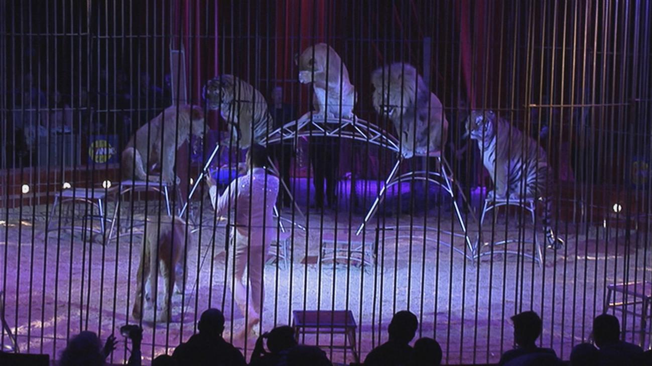 Los circos con animales se manifiestan para pedir al Ayuntamiento que no los prohíba