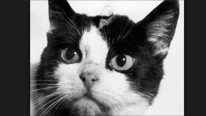 Un gato pierde una pata tras ser disparado en San Sebastián de los Reyes