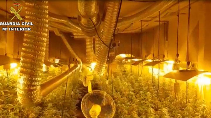 Cinco detenidos en Arganda que cultivaban marihuana en dos viviendas