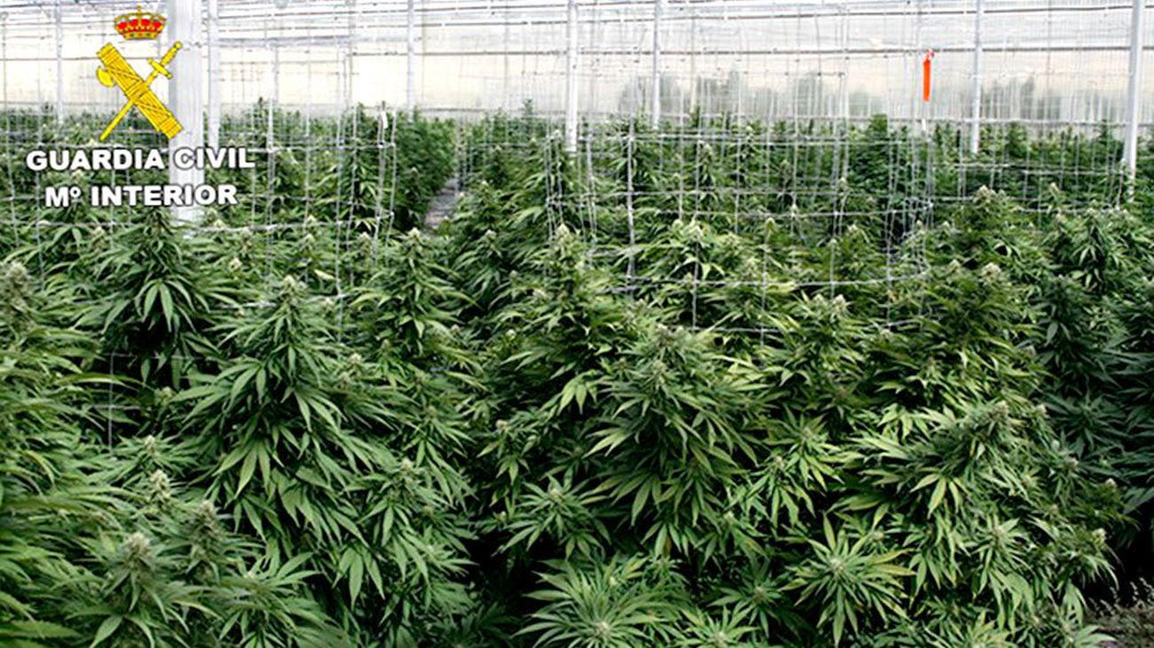 Veintidós detenidos de una red china que vendía marihuana a narcos europeos