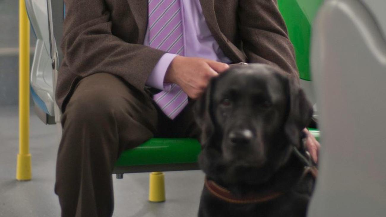 Los perros podrán viajar en los autobuses de Madrid a pie, con correa y bozal