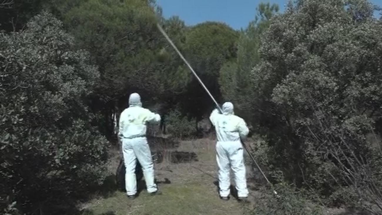 Preocupación por la plaga de orugas en toda la Comunidad de Madrid