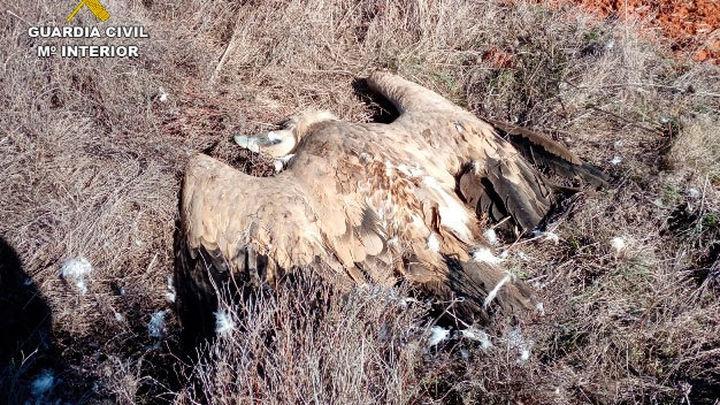 La Guardia Civil detiene a 21 personas por envenenar con cebos a especies protegidas