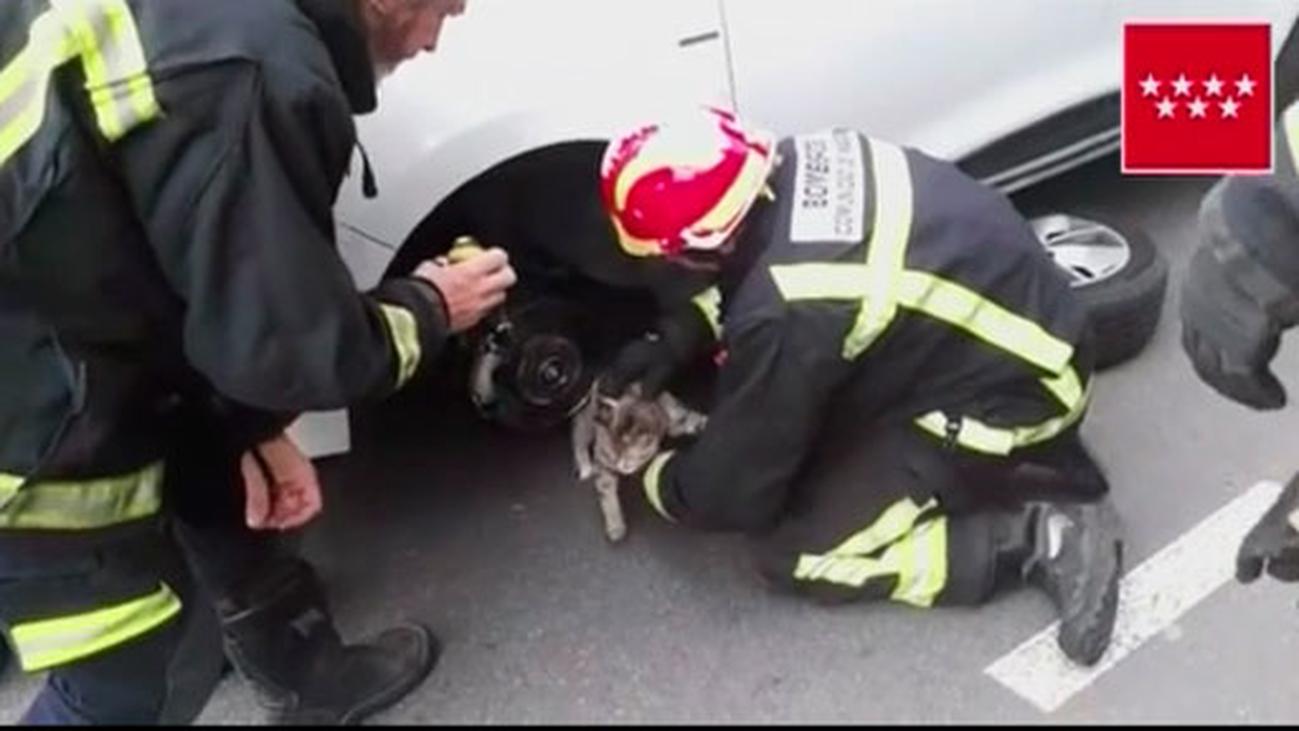 Los bomberos rescatan en Galapagar a un gatito atrapado en el motor de un coche