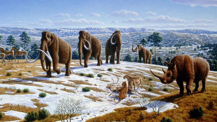 Los humanos jugaron un rol en las extinciones del Pleistoceno