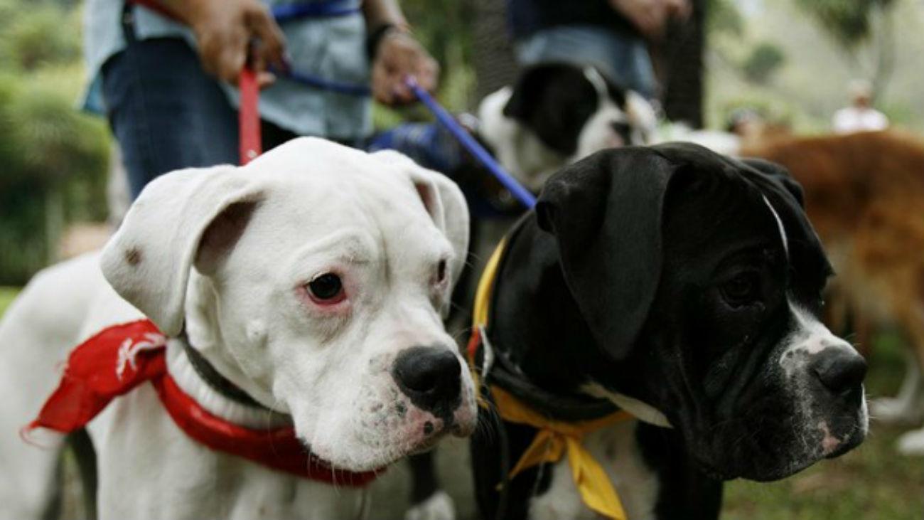 Matan a perros en Usera envenenando su comida con alfileres