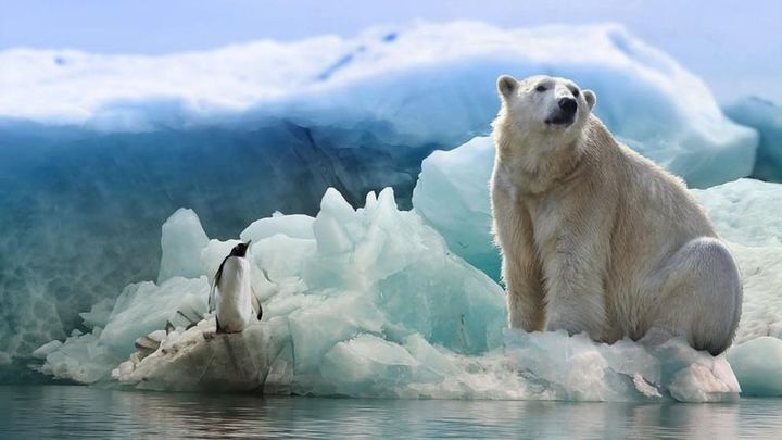 Mirar escenas de realidad virtual del Ártico ayuda a aliviar el dolor