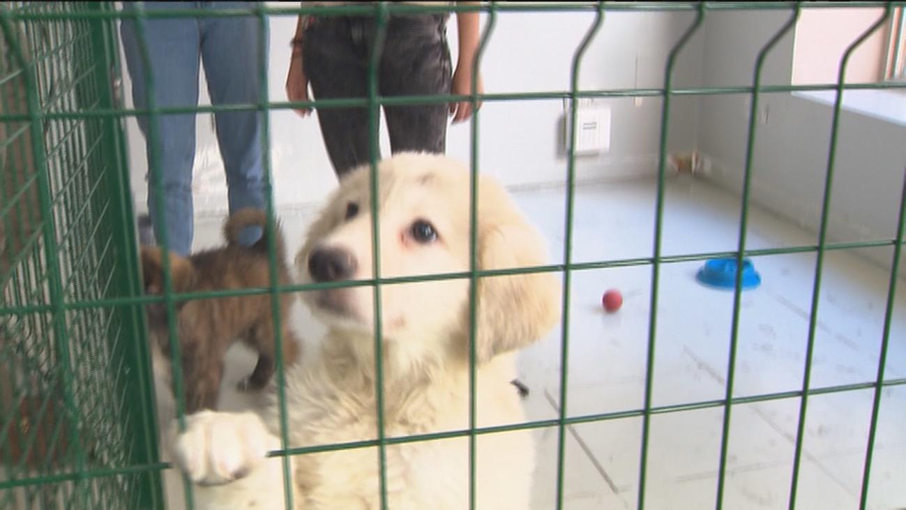 Un café en Madrid permite acariciar y jugar con perros, que también pueden ser adoptados