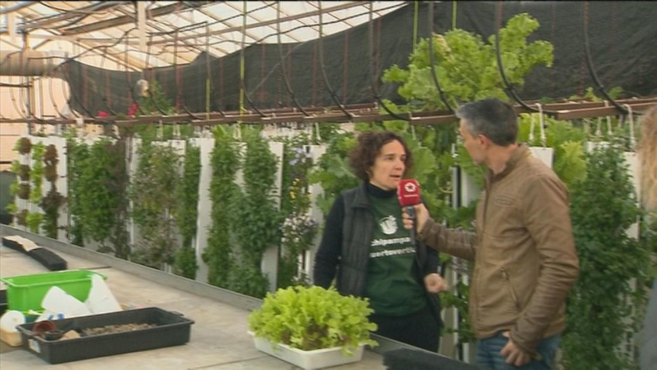 Cultivar sin tierra en Madrid capital