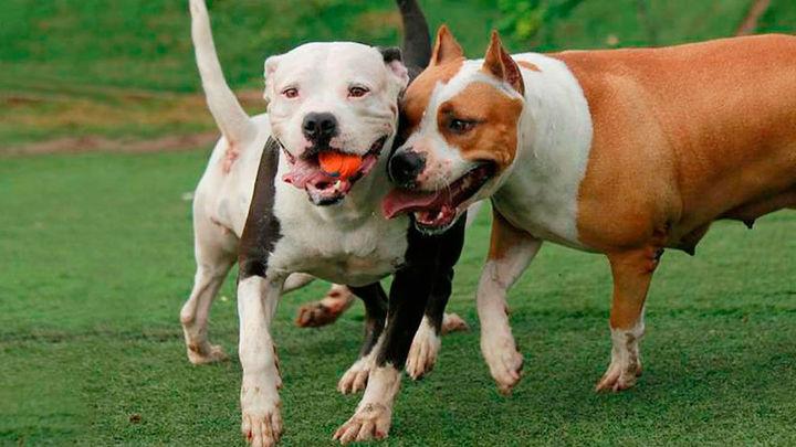 Vecinos del Pau de Móstoles denuncian el envenenamiento de sus perros