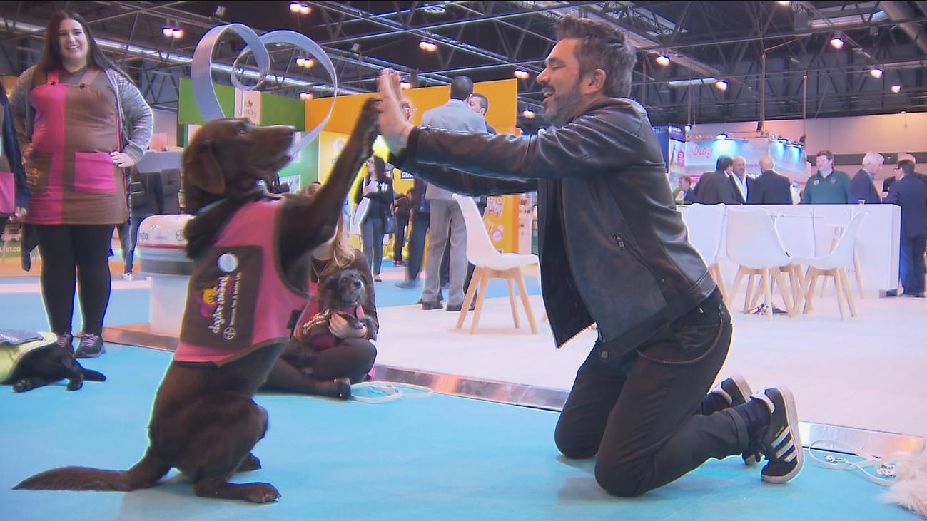 Helados para perros, cerveza y cosmética vegana, entre las novedades de la feria de mascotas
