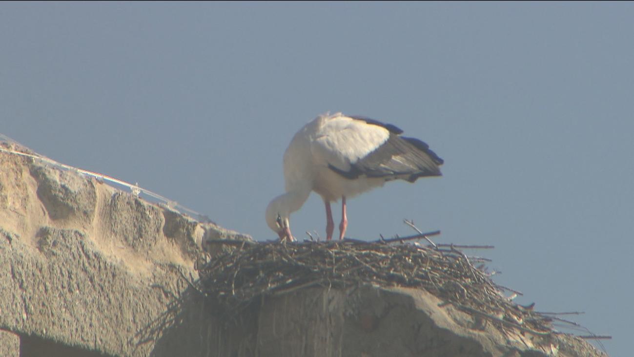 San Lorenzo de El Escorial instala postes especiales para nidos de cigüeñas