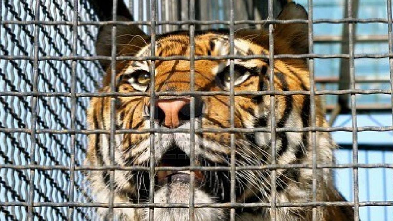 Madrid veta los circos con animales salvajes