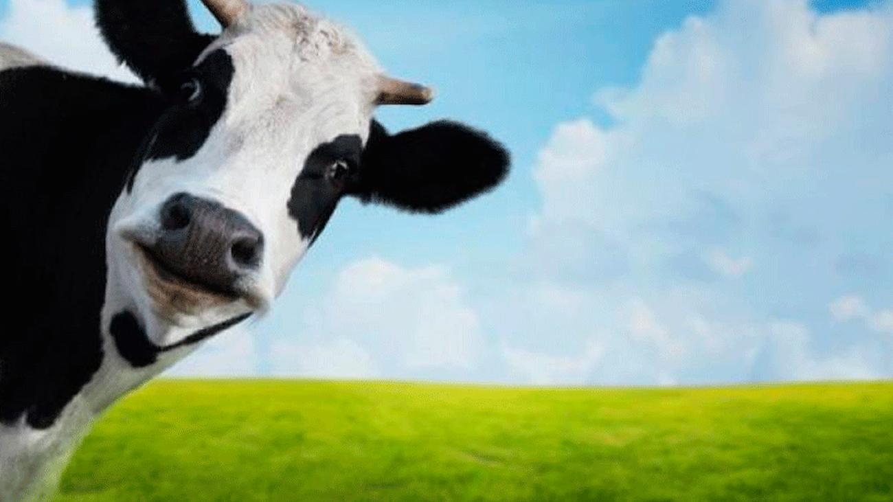 ¿Y si eliminamos la leche de nuestra dieta?