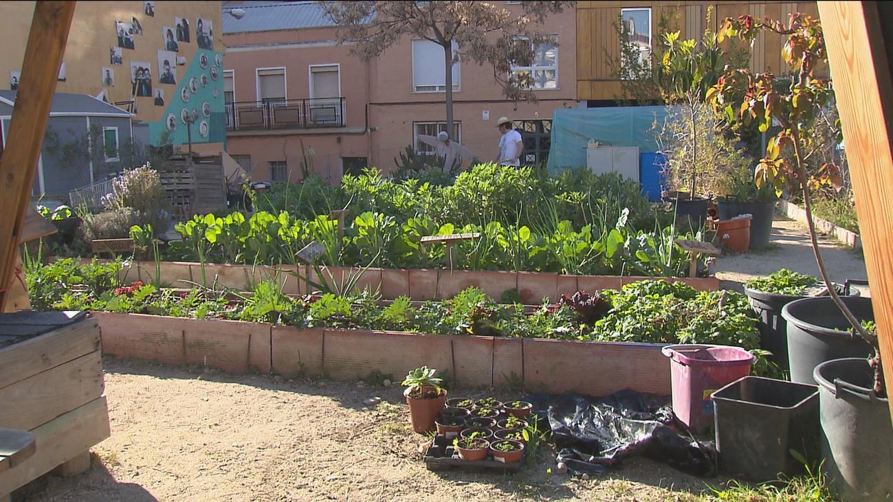 Vecinos de Valdeacederas gestionan un huerto urbano en pleno Tetuán